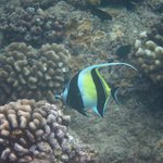 Black Rock Snorkeling