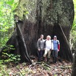 Largest Kapok Tree in the region.