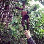 Feeding a monkey at a local village.