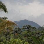 A view from The Farm Inn's Palapa