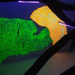 Fluorescente1