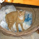 Kot ukryty pod stoiskiem z pamiątkami