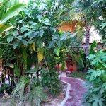 Bayon Garden Guesthouse