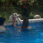 Playing with Maxine in the pool