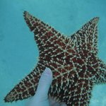 Starfish spotted near shore