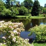 Asitcou Gardens