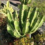 lovely cactii planted
