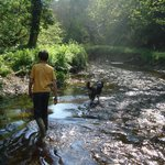 stream walking with Sorrel dog in our 'Robin Hood Land'