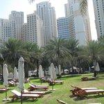 The palm garden