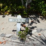 Driveway for Coco Plum Cottage