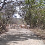 Day trip to Nosara