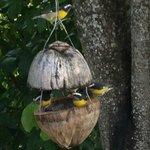 Sugar Birds