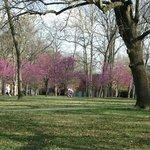 nice flowering trees in washington park botanical gardens