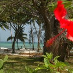 Mbuyu Beach Bungalows - a tropical garden on the ocean