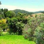 Waratah garden and view