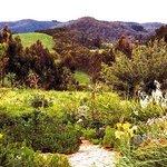 Waratah Garden