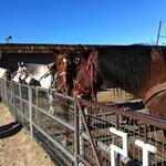Horse&Horse&Horse