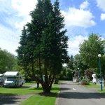 Bath Marina & Caravan Park