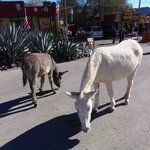 town of Oatman ... must visit!