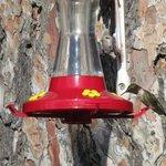 lots and lots of hummingbird feeders