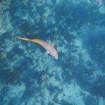 Snorkeling Bight Reef