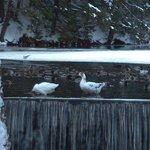 duck pond