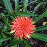 Tico Esteban tour of Corcovado NP - beautiful flower