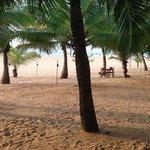 allée de palmiers devant l'hôtel