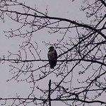 Eaglet near to hotel