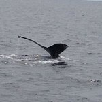 Whales  tail