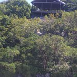 Ananda Pavilion offers panoramic views of treetops, ocean and sunset