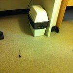Cigarette burns on the carpet