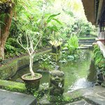 Pond behind lobby full of Koy fish.