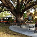 Live Oak tree at the HoJo