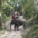 Elephant riding in the high country