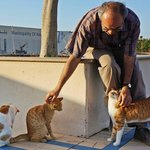 Pet stray cats at the Corniche
