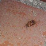 cockroach, yummy