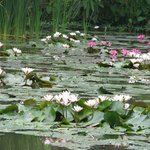 Pond View, a ' Monet Moment!!'