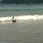 Pelican at beach