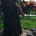 Giant friendly squirrels