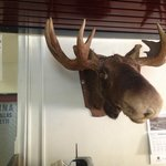 The Moose! (Hotel name in Finnish is Hotel Moose)