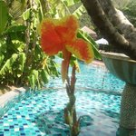 a beautiful blooming orchid by the pool