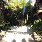 Walk towards the beach Dos Ceibas