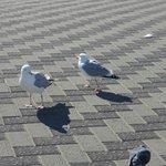 feeding the birds at the beach
