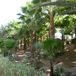 Les jardins du Riu Funana