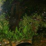 Dehiwala Zoo-Colombo,Sri Lanka