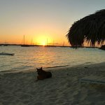 Sonnenuntergang am Strand mit Haushund
