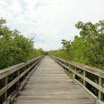 Weg zum Bootsanleger- Mangrooven hautnah