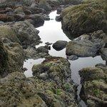 Tidepools on beach below the Coho
