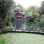 Foto de Lago Mindo Frog Concert